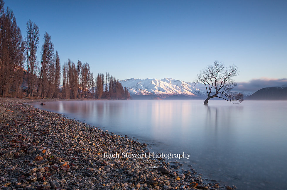 The Wanaka Tree winter sunrise