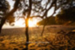 Orokawa Bay Coromandel sunrise