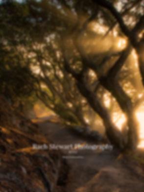Mount Maunganui sunrise base track