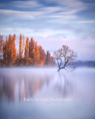 Wanaka Tree Fog