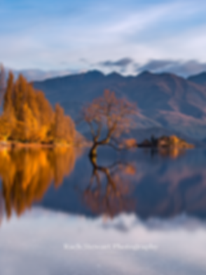Wanaka Tree Autumn reflections