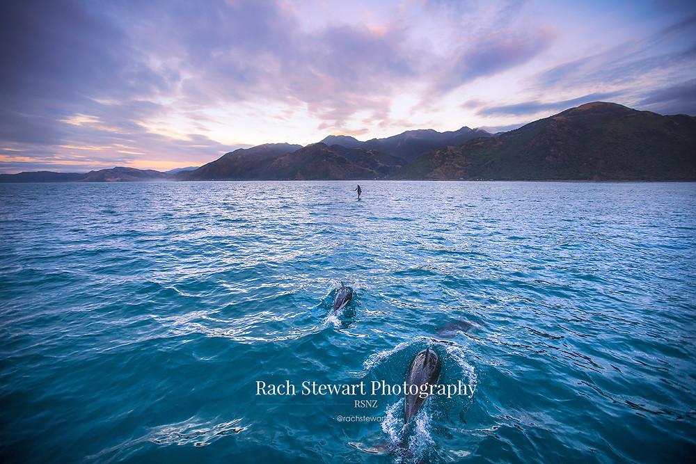 Dolphin swim, Kaikoura