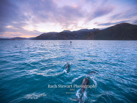 WHY YOU NEED TO VISIT KAIKOURA NEW ZEALAND