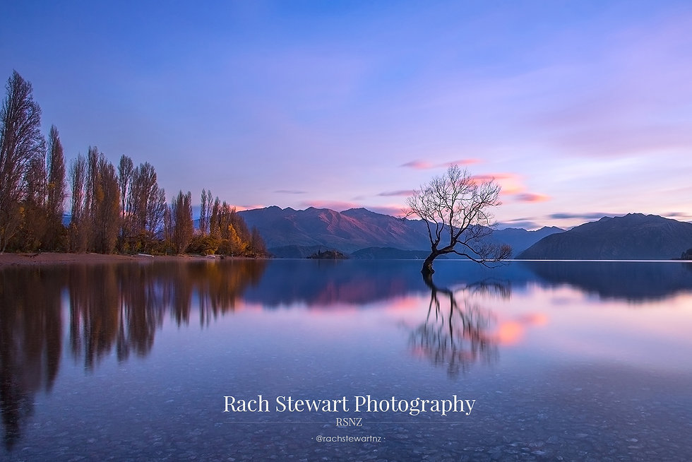 Wanaka tree reflection sunrise