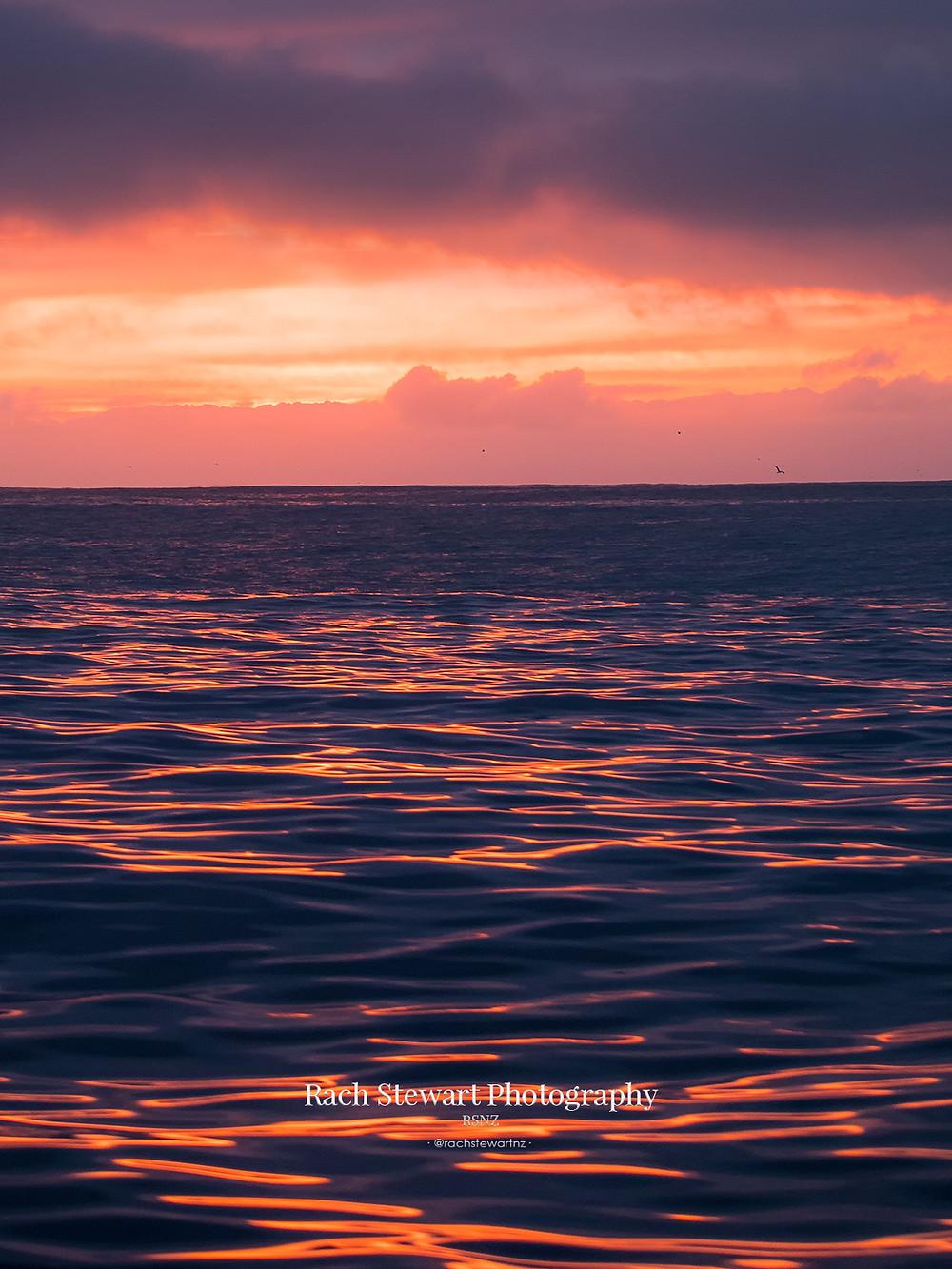 Sunrise Dolphin Encounter Kaikoura