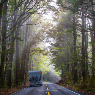 Wilderness-NZ-Road-to-Milford.jpg