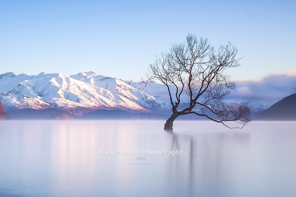 Winter Wanaka Tree