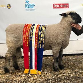 Sheepvention Champion
