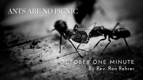 One Minute for October 2021 – ANTS Are No Picnic