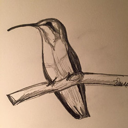 Very simple sketch.jpg__Hummingbird.jpg.jpg