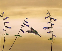 Hummingbird series___Trochilidae_