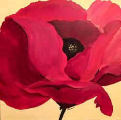 Poppy.jpg.jpg