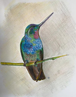 Ruby Throated Hummingbird..