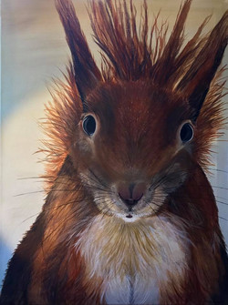 squirrel  April 2018