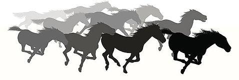 horse stampede_edited.jpg