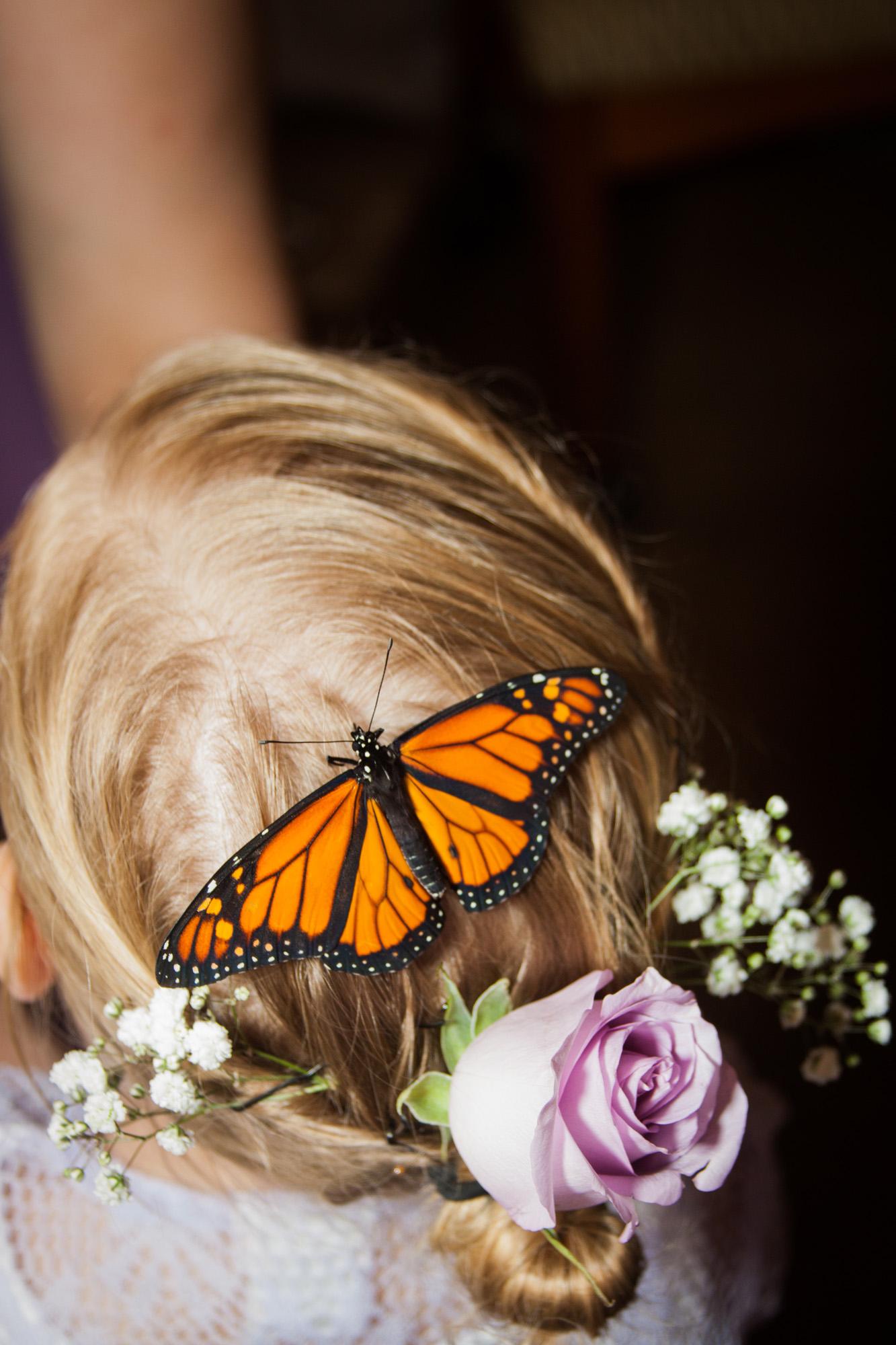 Butterfly on flowergirls hair