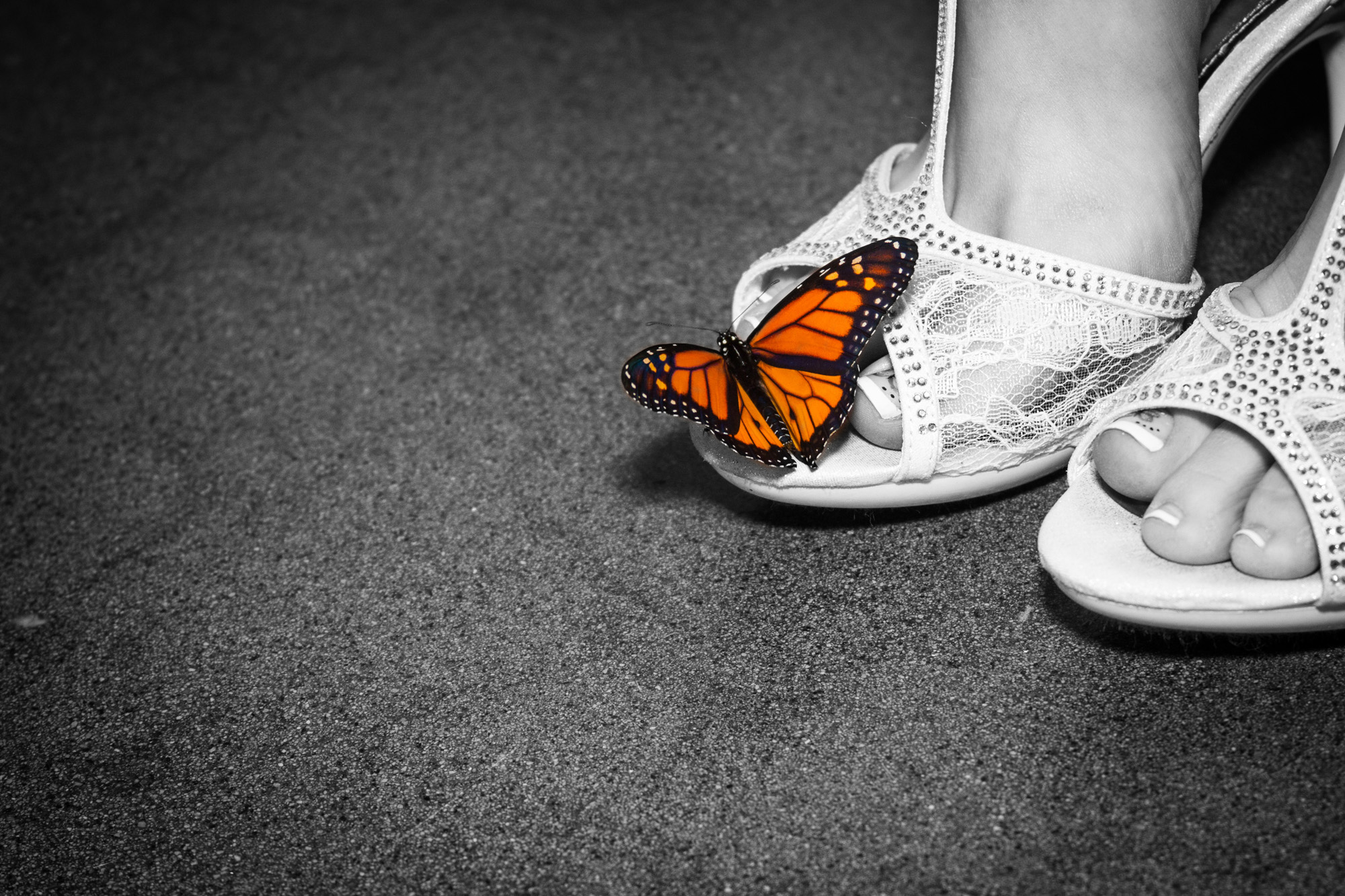 Butterfly release preparation