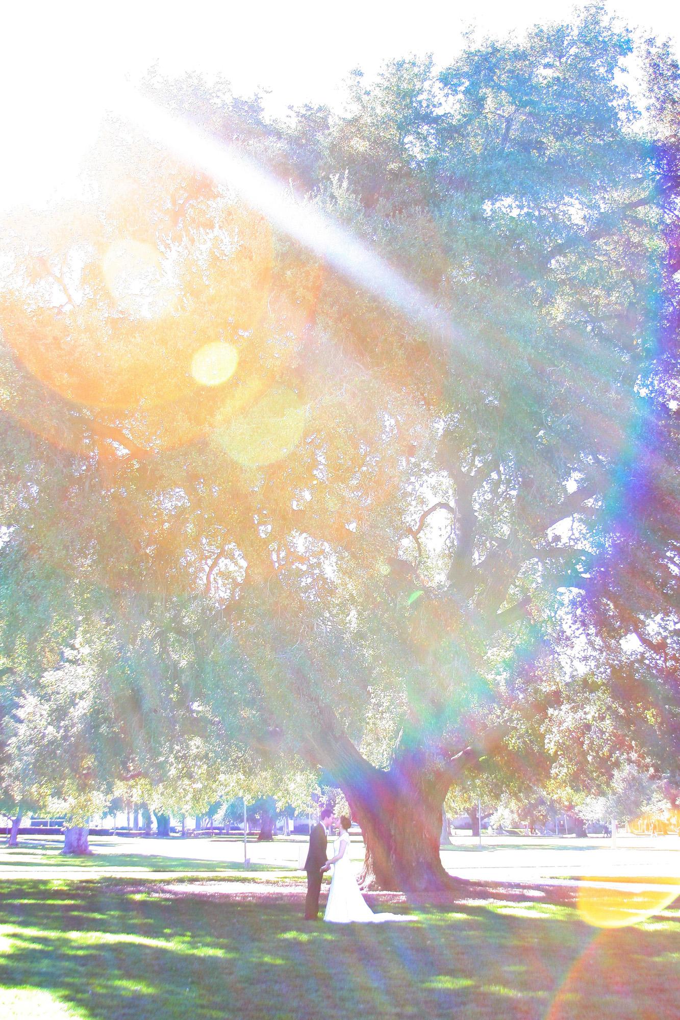 sun flare first look under tree