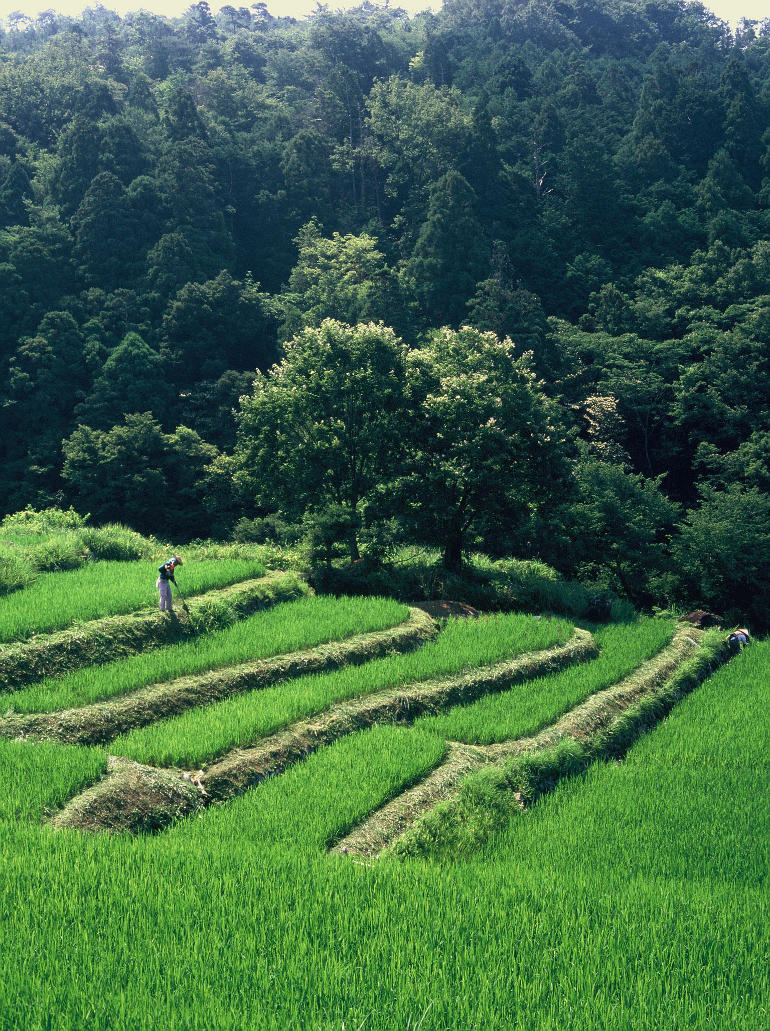 04 草刈り
