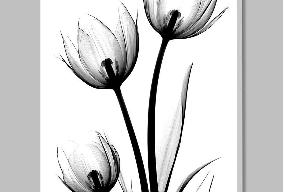 Placa Decorativa Personalizada Tulipa P&B I