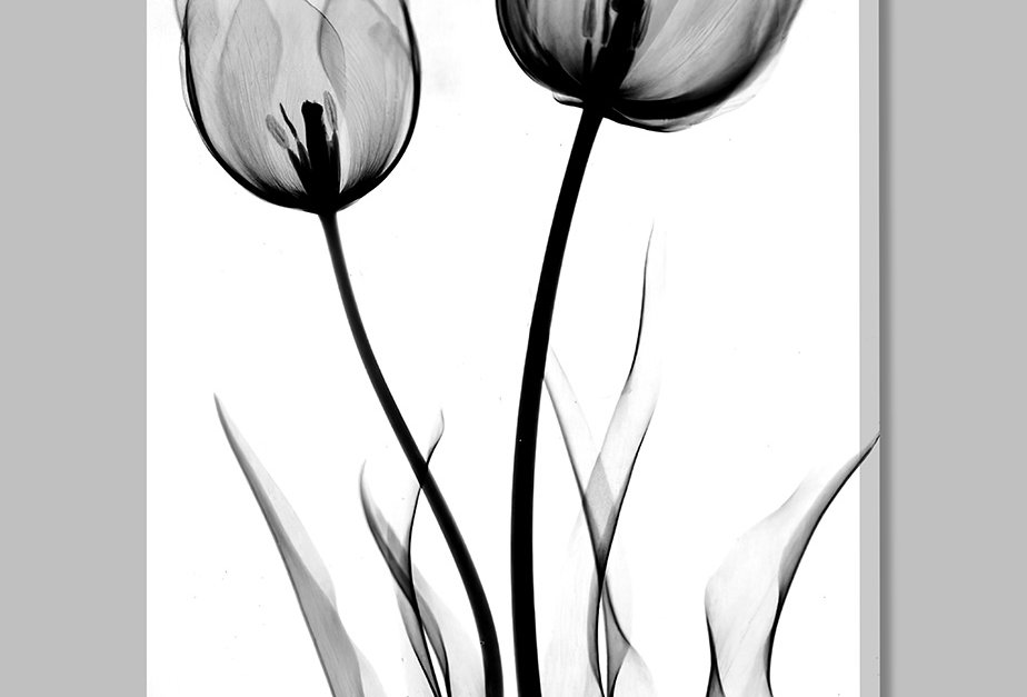 Placa Decorativa Personalizada Tulipa P&B III