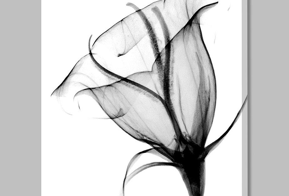 Placa Decorativa Personalizada Tulipa P&B II