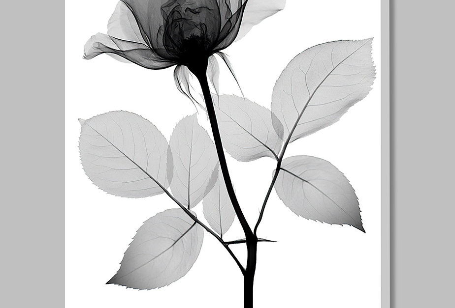 Placa Decorativa Personalizada D'Flora III