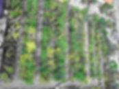 Gartentage-web.jpg