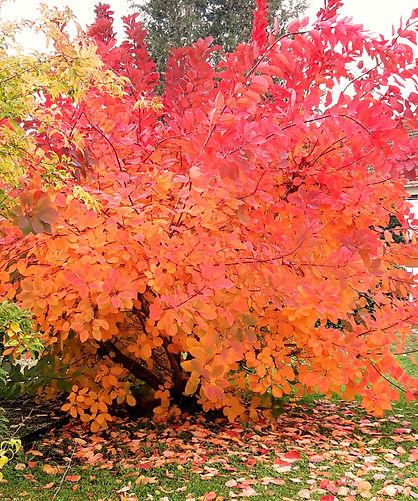 automne_edited_edited.jpg