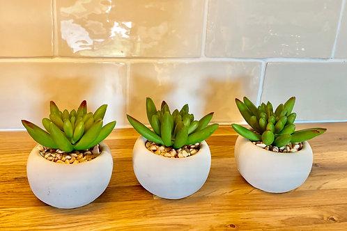 Miniature Potted Succulent Little Jewel