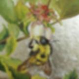 VanOtterloo_Bumblebee_on_blueberry_bloss