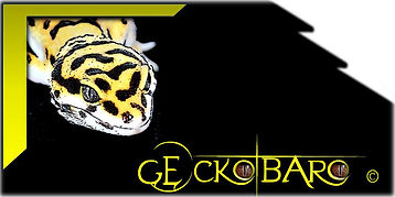 Logo page.JPG