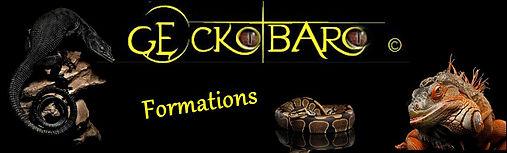 Logo Geckobaro formations - 2.JPG