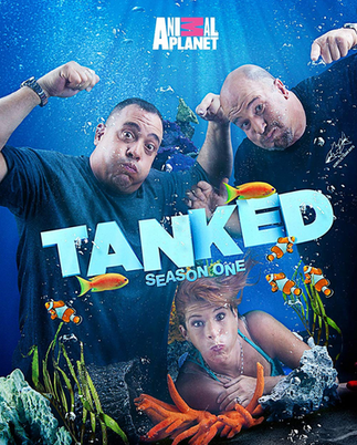 """New """"rock"""" track found floating around the Animal Planet's show """"Tanked"""""""