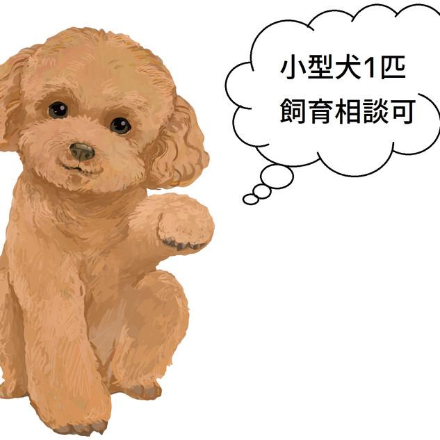 トイプードル イラスト 画像 小型犬1匹飼育相談可.jpg