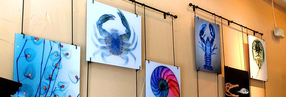 XRay Pictographs of Marine Life