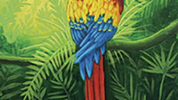 Mr. Macaw