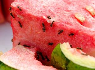 Slip for myrerne.jpg