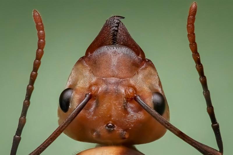 Myredronningens antenner | MyreExpressen