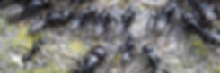 Myrebekæmpelse i Vejle | MyreExpressen