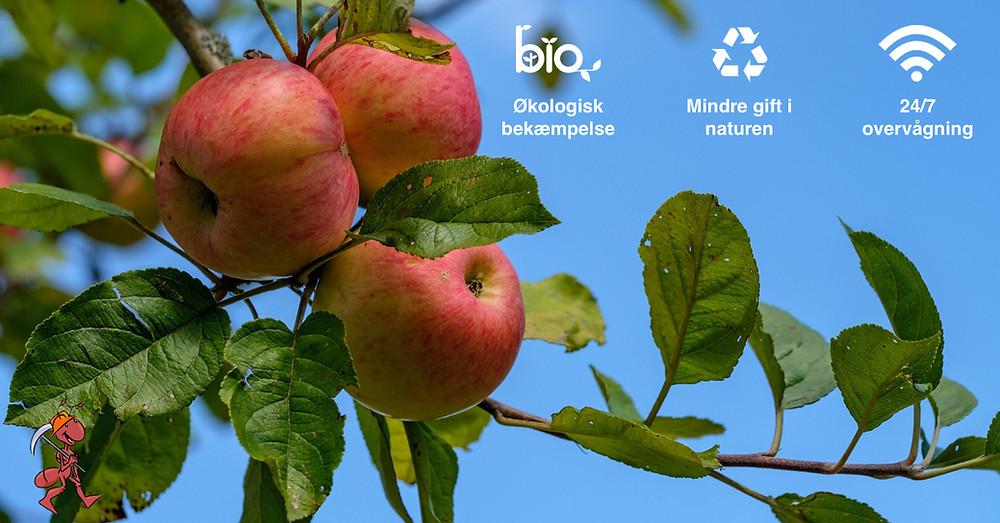 Økologisk skadedyrsbekæmpelse | 100 % giftfri