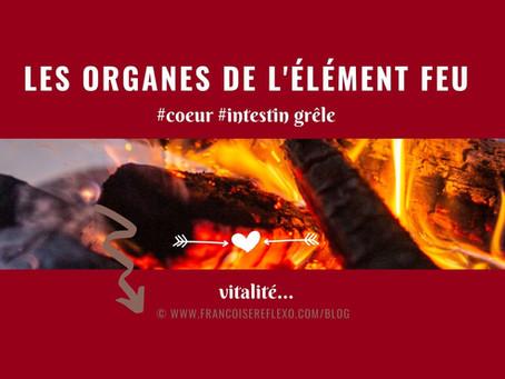 Les organes de l'élément FEU : Le Cœur et l'Intestin Grêle