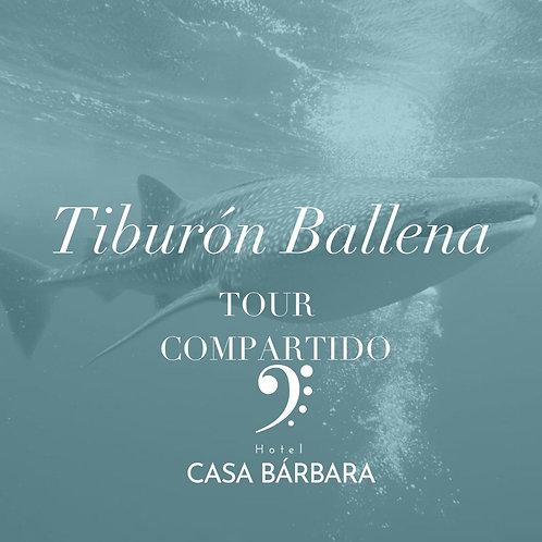 Búsqueda del Tiburón Ballena - Tour Compartido CB