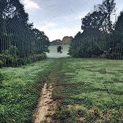Cherokee Park Spiderweb.jpg
