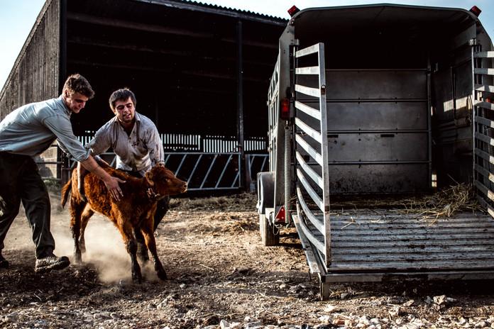 Documentary Project On A Farm