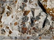Verrucarietea Aspicilion calcareae carpa