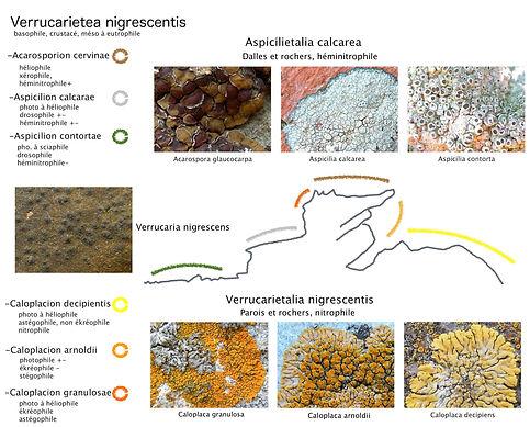 Verrucarietea_transect_°Ls-doc.jpg