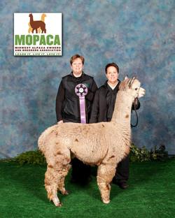 MOPACA Maybeline copy 2