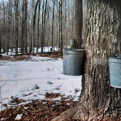 Sap bucket season 4.jpg