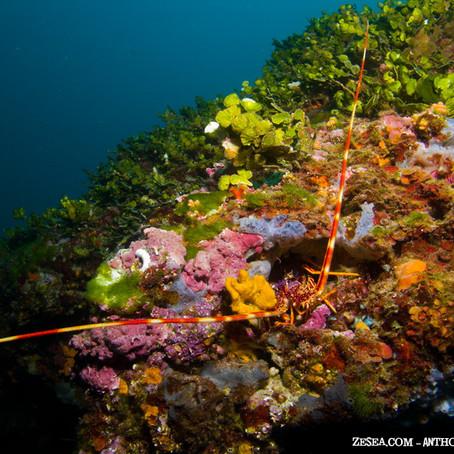 Le Coralligène en 3 minutes : comment ça marche ?